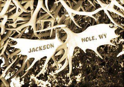 Jacksonhole4
