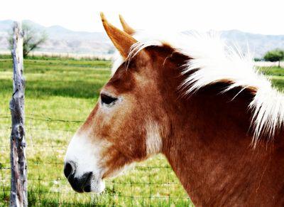 Mule11